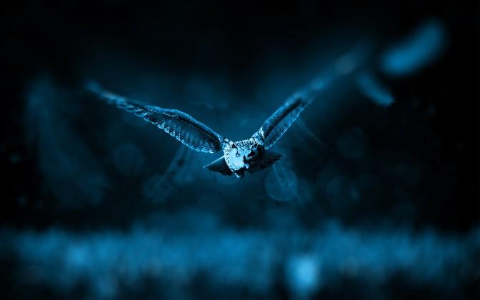 night-owl-hd-desktop-wallpaper