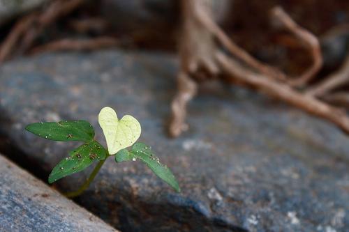 Amikor a szeretet Terében vagyunk…